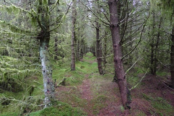 Gjennom skogen på vei til post