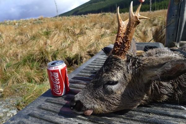 Langt å bære ja... Smaker godt med en Cola da