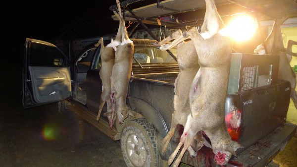 Litt aktiv jakt, gir resultater