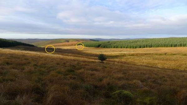 Geit å lam spottet i andre enden av feltet (innringet)