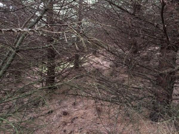 Så tett skog, så ønsker man IKKE at de skal løpe langt!