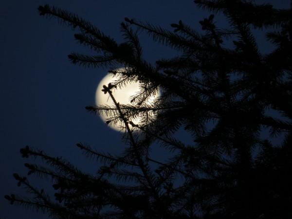 Fullmåne igår kveld