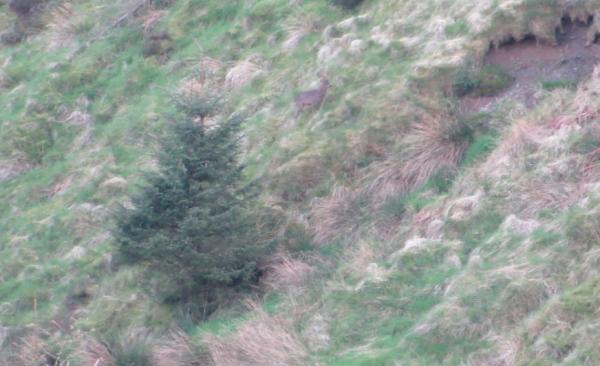 Så går man 250m lenger opp i veien, finner et fint sted å slappe av og spotte etter flere dyr. Så dukker denne karen opp