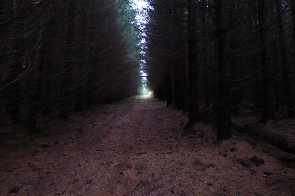 Rett før jeg går inn her, så ser jeg geit og liten bukk helt på toppen av hvor jeg skal inn i skogen. Avstand er 480mtr og jeg ser bare øverste halvdel av ryggen. Uaktuelt å skyte eller å snike seg inn den veien, da det er masse sau mellom oss.